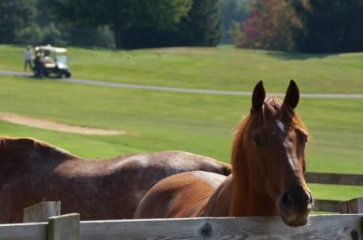 b_horses